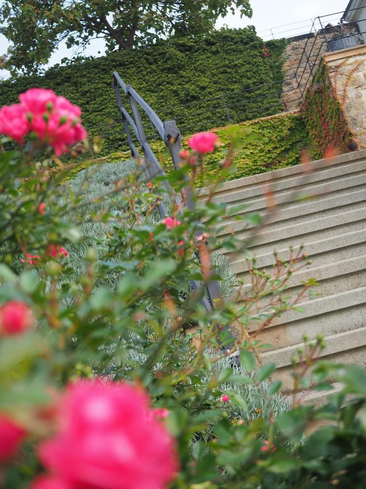 Zámek Děčín, zahrady, Děčín, Ústecko, výlet, růžová zahrada