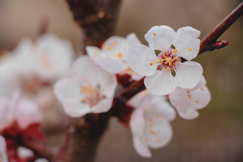 Chvilka poezie podle Evy Brixix: Na zahradě